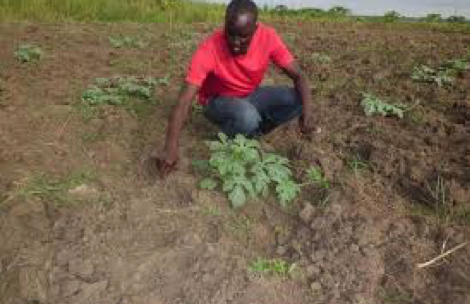 agronomy post